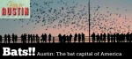 Visit Austin's Bridge of Bats