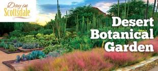 Desert Botanical Garden Up Close