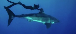Kimi Werner's famous Great White shark encounter (ride) in Mexico as documented by her boyfriend, Justin Turkowski.
