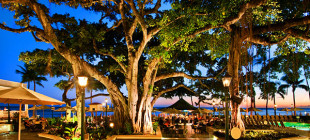 Banyan Tree Waikiki Hawaii
