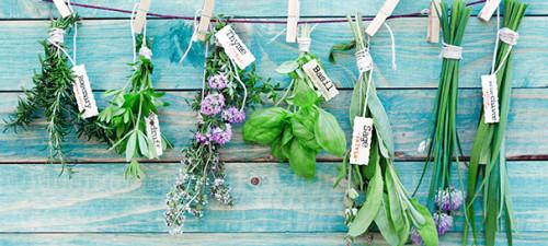 Herbs Web Banner