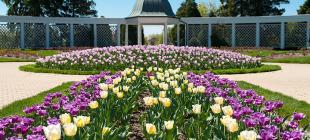 Botanical-Gardens-Tulips
