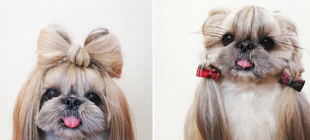 This Tiny, Stylish Dog Will Give You Hair Envy